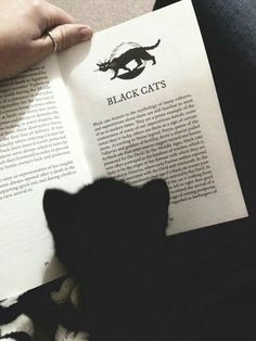 Black cat reading about black cats :) and like OMG! get some yourself some pawtastic adorable cat apparel! Crazy Cat Lady, Crazy Cats, I Love Cats, Cute Cats, Adorable Kittens, Cat Reading, Reading Books, Reading Time, Photo Chat