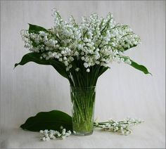 Gif_Paradise: Lily of the Valley Lily Of The Valley, Botany, Dried Flowers, Planting Flowers, Flower Arrangements, Beautiful Flowers, Glass Vase, Images, Plants