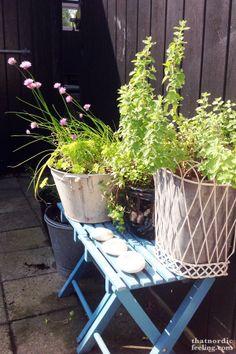 Herb garden on verandah? Beautiful Gardens, Blooming Flowers, Herbs, Container Gardening Flowers, Small Gardens, Herb Garden, Garden Furniture, Garden Layout, Garden
