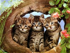 Three little kittens who have their mittens.