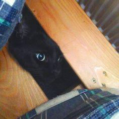 Meet Milo - Nomad Seeks Home