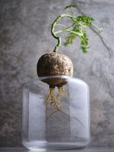 Hett just nu: Vackra vaser för dina sticklingar att gro i All About Plants, House Plants, Greenery, Perfume Bottles, Vase, Heaven, Gardening, Beauty, Decor