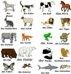 Bildergebnis für tiere deutsch