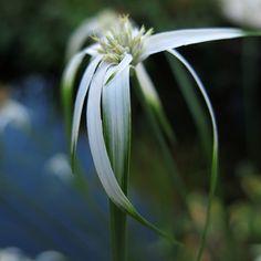 """""""elegant"""" image by Marjolein Dallinga, white flower #marjoleindallinga #bloomfelt #white #whiteflower"""
