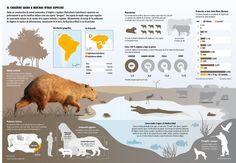 Capybara – by Nicolas Ramallo