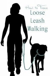 Does your dog pull on the leash? Here are some tips to train loose leash walking.