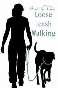 How to Train Loose Leash Walking