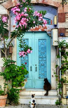 Blue door - Three cats wait patiently to enter in Izmir, Turkey.                                                                                                                                                                                 More