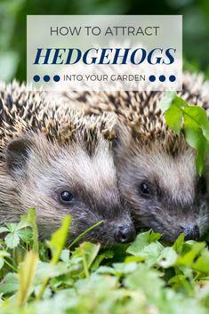 Wildlife garden design - How to attract hedgehogs into your garden – Wildlife garden design Hedgehog In Garden, Diy Hedgehog House, Wildlife Week, Wildlife Nature, Garden Care, Mini Pond, Front Garden Landscape, Garden Animals, Home Vegetable Garden