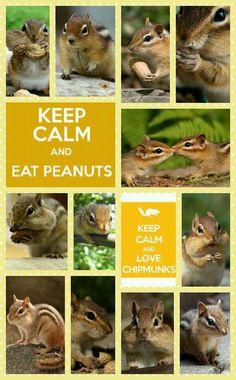 Keep calm and Love a Chipmunk..