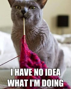 all the time! More so the dog. I've lost more bamboo knitting needles to my puppy. The cat just lays on knitting removing stitches as he moves the yarn to suit his comfort Knitting Quotes, Knitting Humor, Crochet Humor, Funny Crochet, Cute Cats, Funny Cats, Funny Animals, Cute Animals, Crazy Cat Lady