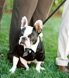 if you have a well behaved pet I am all for having them in your wedding!