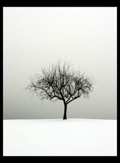 Many beautiful tree images 40 Naturally Beautiful Photos of Trees | PSDFan