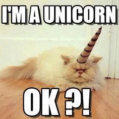 I'M a UNICORN. Cat Unicorn meme - Cast your vote, share, discuss and browse similar memes Unicorn Memes, Unicorn Cat, Unicorn Shirt, Fat Cats, Cats And Kittens, Animal Memes, Funny Animals, Unicorn Poster, Unicorns And Mermaids