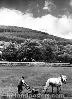 "Old Ireland country image, Irish farmer & horse plough///////""Tilling the field: The cloud that never moved Is gone, BUSON Irish Images, Ireland Country, Irish Culture, Galway Ireland, Country Scenes, Emerald Isle, Old Photos, Vintage Photos, Scenery"