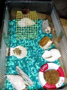 Hermit crabs like having seashells as furniture too! #DIY - PetDIYs.com