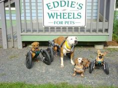 Eddie's Wheels - We build mobility carts for all four-leggeds with mobility challenges. Everything except the actual wheels are manufactured from scratch at our workshop in Shelburne Falls, MA. Every cart goes out with the name of the pet on it, and is designed to match their body's dimensions and be engineered to best address their abilities and disabilities. Testimonials: http://eddieswheels.com/category/testimonials/