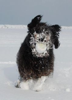 A little (lot of ) snow didn't stop Gracie the Wonderdog from finding her tennis ball. Michigan