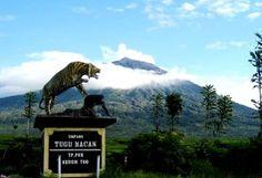 Gunung Kerinci Semburkan Abu Vulkanis