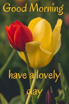 [Good morning love] Latest good morning images for love ~ Good morning inages Good Morning Love You, Tuesday Quotes Good Morning, Good Morning Dear Friend, Good Morning Kisses, Latest Good Morning Images, Morning Wishes Quotes, Good Morning Happy Sunday, Good Morning Beautiful Quotes, Good Morning Picture