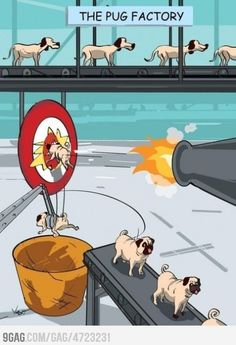 How Pugs are made...