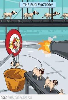 Pugs factory