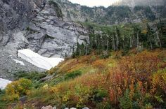 Fall in the forest | Photo gallery - HeraldNet.com  Fireweed grows at the Big Four Ice Caves in the Mount Baker-Snoqualmie National Forest