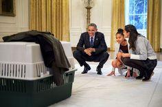 #44thPresident #BarackObama watched his #daughters Sasha and Malia meeting Mac the Turkey in November 2014.. President Obama Pardoned Mac Thanksgiving Turkey #Obama44 #ObamaLegacy #ObamaHistory #ObamaLibrary #ObamaFoundation Obama.org