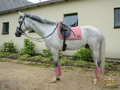 ANKY Alt Rosa saddle pad and bandages