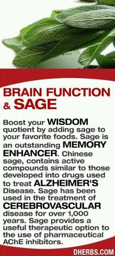 Boost your wisdom quotient by adding sage to your favorite foods. Sage is an outstanding memory enhancer. Chinese sage, contains active compounds similar to those developed into drugs used to treat Alzheimer's Disease. Sage has been used in the treatment Health And Nutrition, Health Tips, Health And Wellness, Health Recipes, Natural Medicine, Herbal Medicine, Chinese Medicine, Natural Cures, Natural Healing