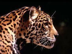 superbe animal