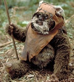 Wicket the Ewok doing the splits.