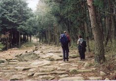 'Ishidatami paving on the Nakasendo Way' - Beautiful ancient highway where you can find Geocaches!