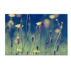 Found it at Wayfair - 'Days in the Sun' by Beata Czyzowska Young Photographic Print on Wrapped Canvas