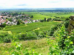 The wine growers of the Palatinate (Rheinland-Pfalz)