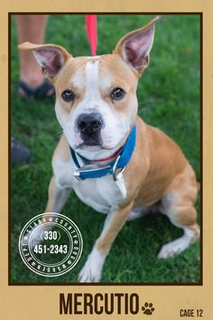 URGENT!!! PLEASE SPONSOR/RESCUE/ADOPT ASAP!!! MERCUCIO (sweetheart)...FOUND IN STARK COUNTY NOW ADOPTABLE!!!! SEE VIDEO!!!!  https://www.petfinder.com/petdetail/29802412/