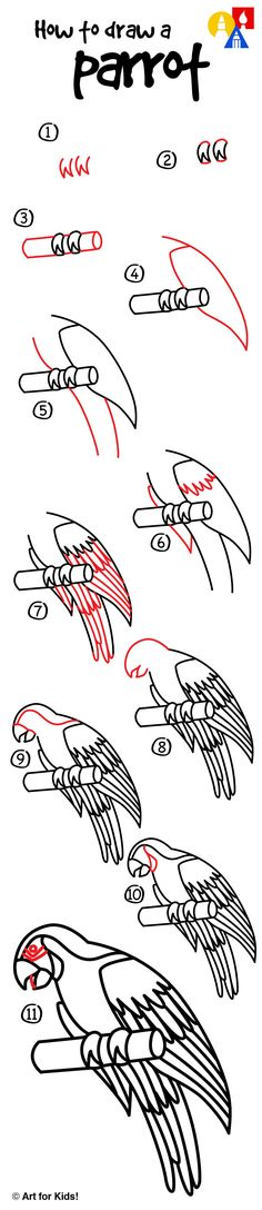 How to draw a parrot!