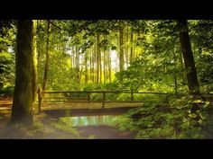 Relaxing Nature Sounds Forest - Meditation Study Sleep Spa Water Sounds Bird Song 12 HOURS HD - YouTube