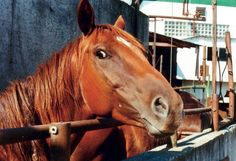 "FOIA confirms Bouvry's plans to re-open ""Death Row for Horses"""