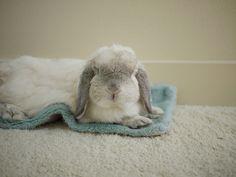 bunny! (: