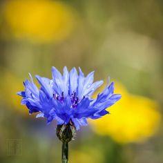 #flowers #flower #ig_flowers #flowerstagram  #ip_blossoms #lovely_flowergarden #bns_flowers