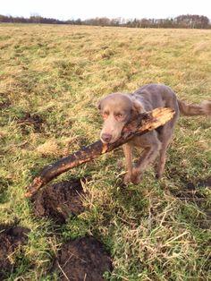 Yummy stick!