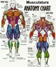 Super hero anatomy
