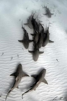 """""""Sharks"""" by Raul Boesel."""