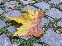 """""""You watch what you eat, you exercise, you have a bit of fun. You keep going forward. Don't stop. Do what makes you happy. Don't look at the clouds of tomorrow through the sunshine of today."""" - Mick Jagger ...............  * The first falling leaf @ UES garden, NYC."""