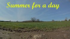Summer for a day