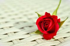 It can appear relatively normal to use flowers as tea ingredients and rose petals been used for centuries in culinary. How do edible rose petals taste? Good Morning Honey, Good Morning Images, White Roses, Red Roses, A Rose For Emily, Cute Love Quotes For Him, Rose Images, Heart Images, Flower Images