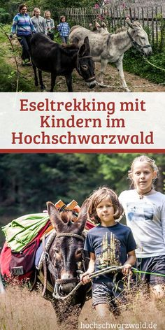 Spring, Bungee, Spring Every kid wants to go hiking with this trick. Donkey trekking in the Black Forest means fun and games for the whole family. But when the kids run, there's the next problem … Camping And Hiking, Camping Hacks, Kids Running, Bungee Jumping, Black Forest, Diamond Are A Girls Best Friend, Trekking, Tours, Explore