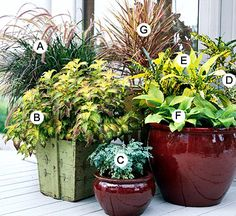bold and dramatic container gardens...