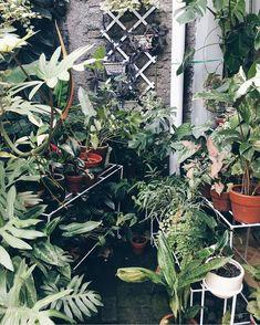 Urban Jungle-Gazing at them is never boring